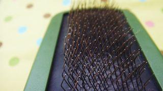 Brushing3 (2)