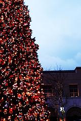 Tree at Victoria Gardens Mall...